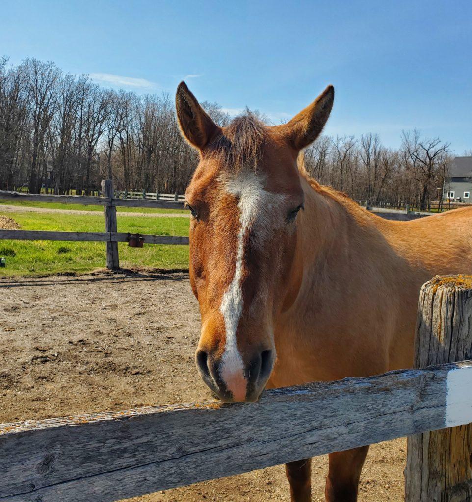 Rufus Horse