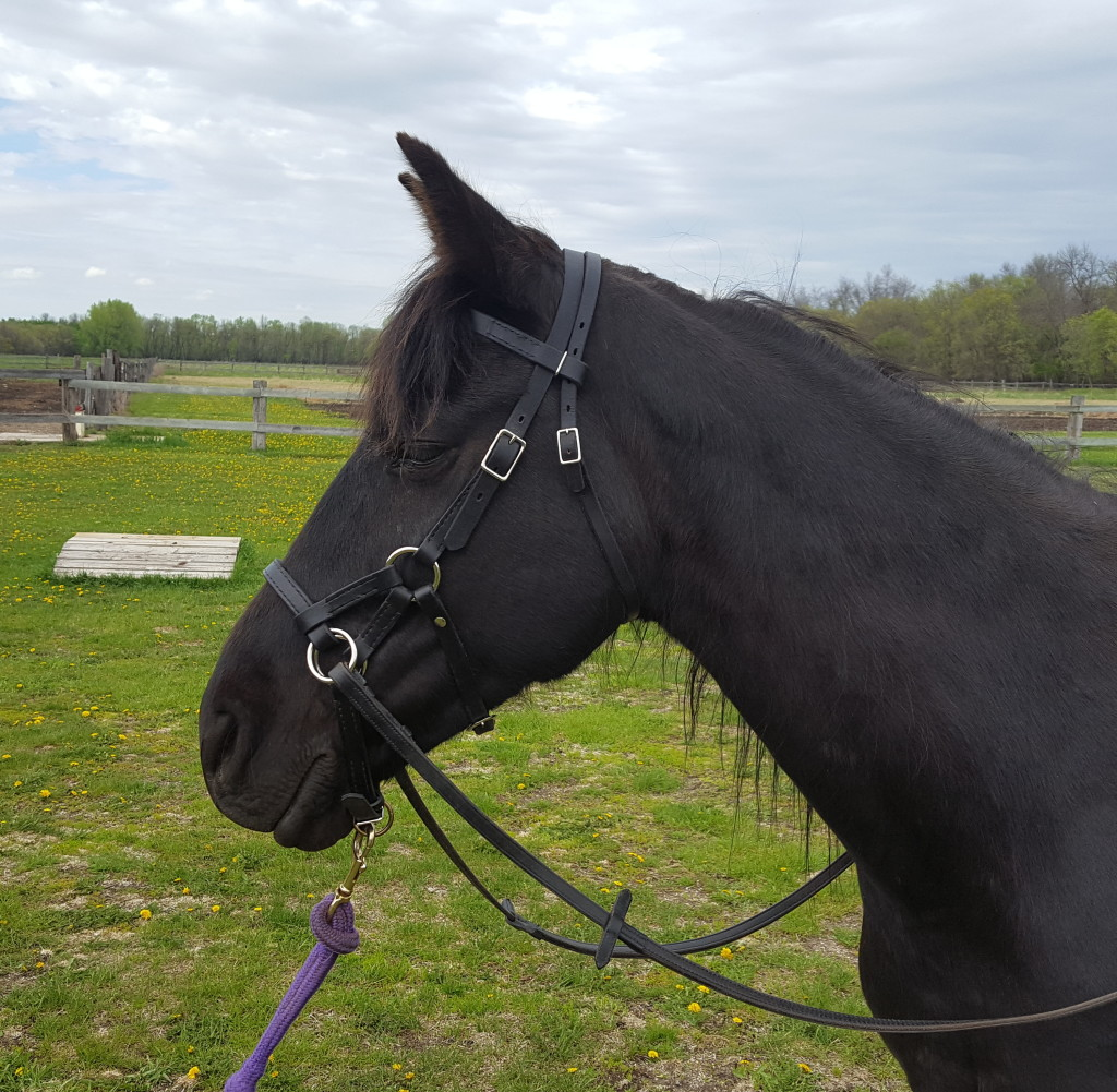 China - horse