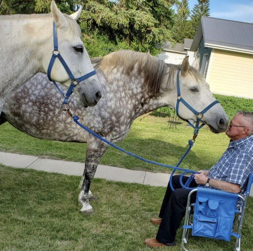 2 horses with man in chair